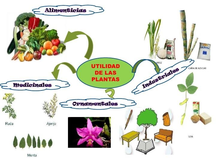 Utilidad de las plantas for Importancia de las plantas ornamentales