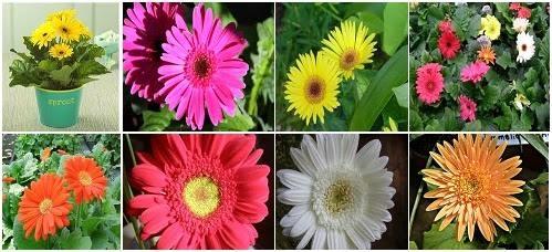 Intranet de alumnos galer a de im genes for 5 nombres de plantas ornamentales